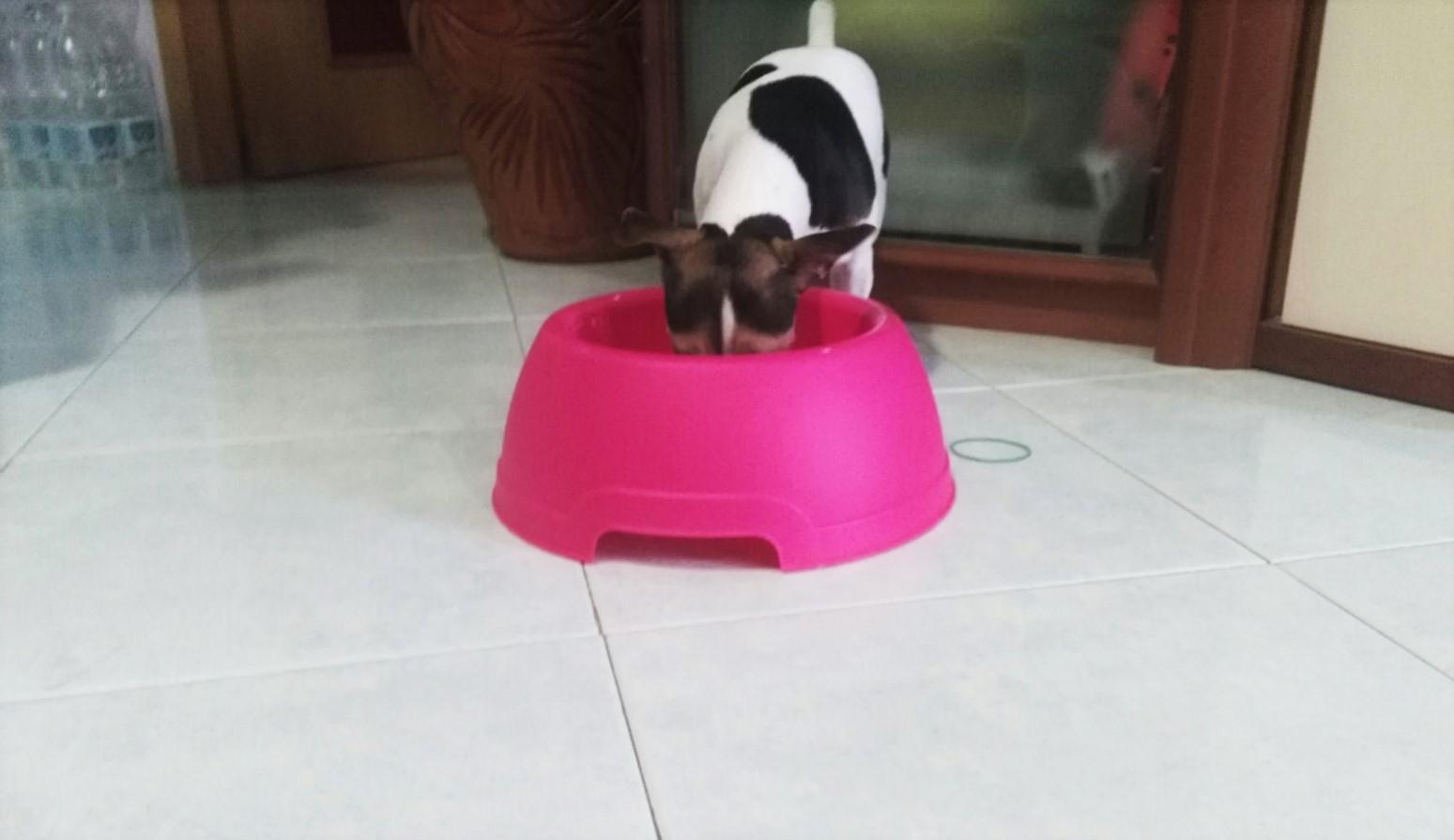 Alt salamotto cani